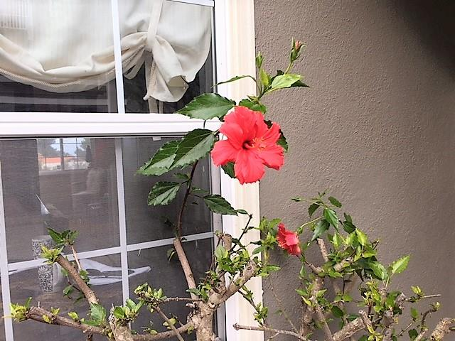1661 David Avenue Monterey, CA 93940 - MLS #: ML81732378